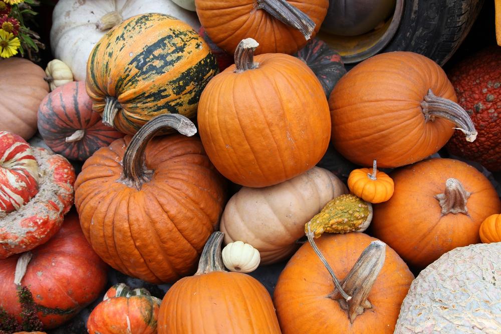 Health Benefits of Pumpkins for Seniors (2)