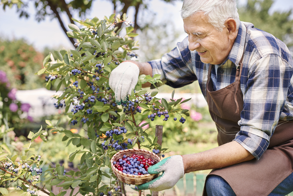 """altr=""""senior citizens and blueberries"""""""