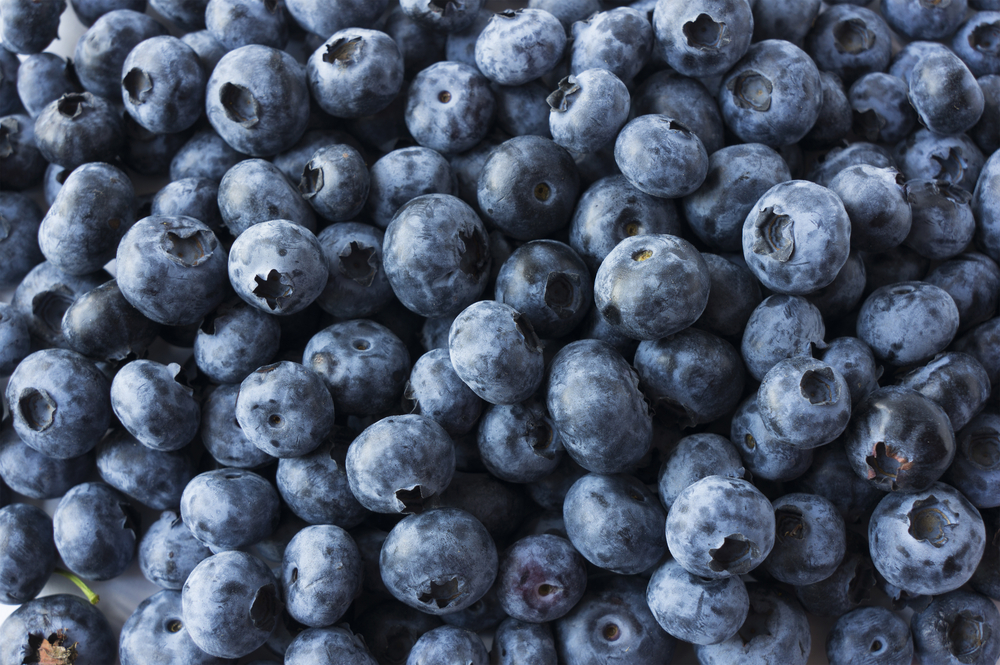 health benefits of blueberries close up of blueberries